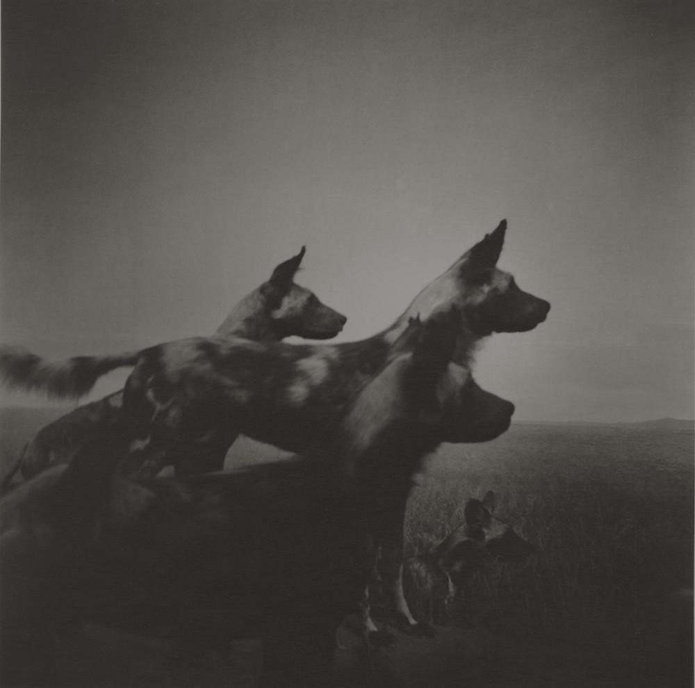 gregor-toerzs-boy-on-safari-no2