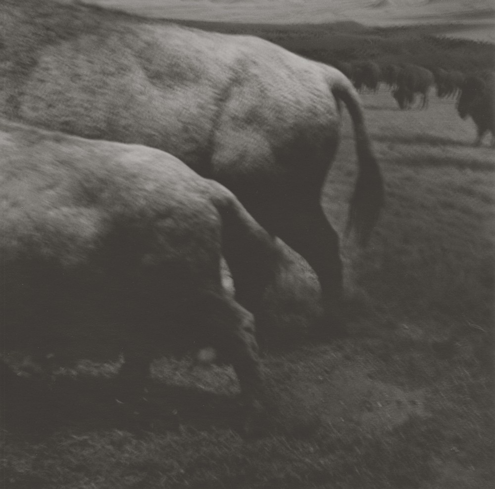gregor-toerzs-boy-on-safari-no4