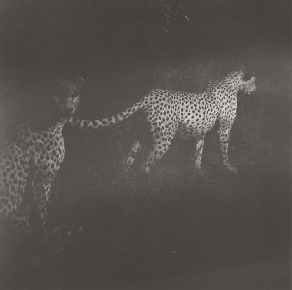 gregor-toerzs-boy-on-safari-no6