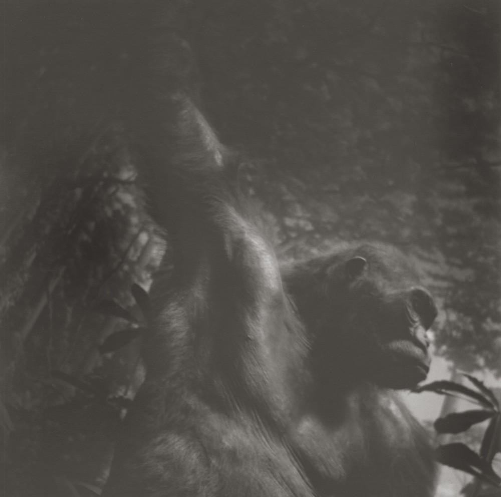 gregor-toerzs-boy-on-safari-no7