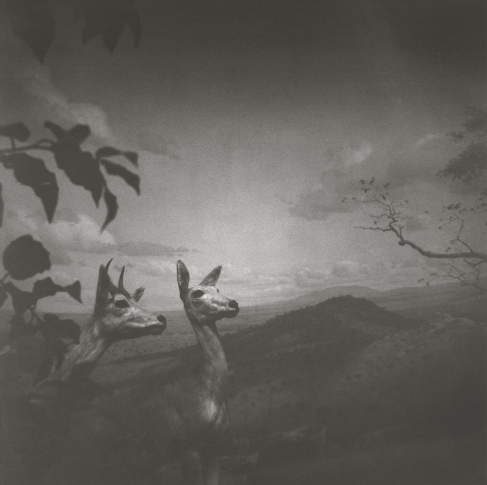 gregor-toerzs-boy-on-safari-no8
