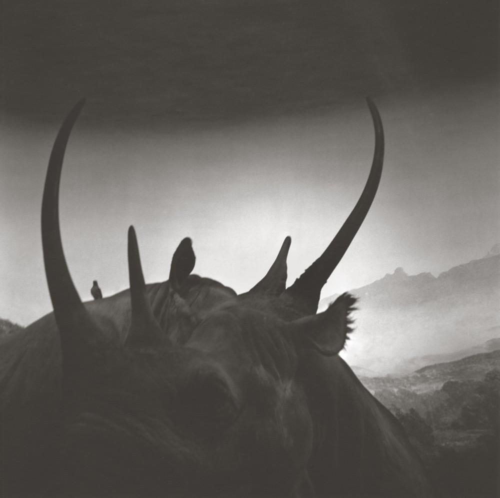 gregor-toerzs-boy-on-safari-no9