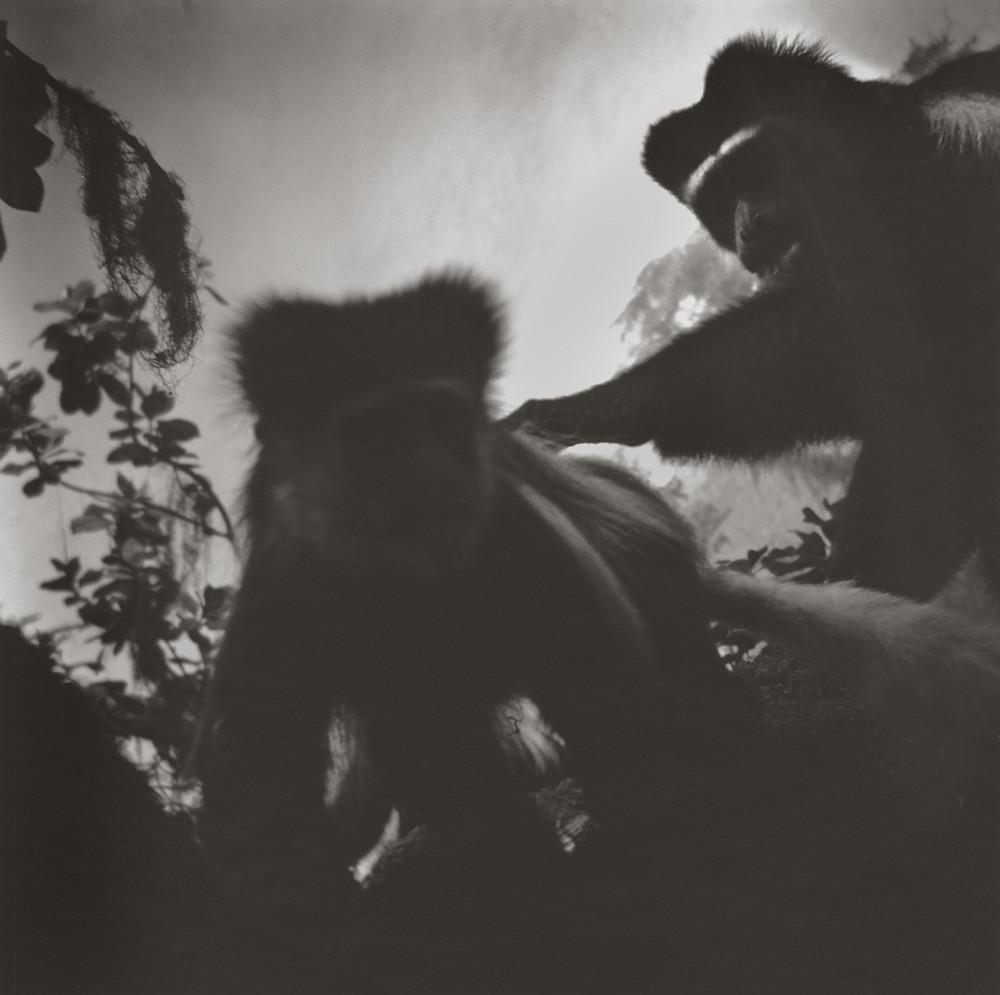 gregor-toerzs-boy-on-safari-no10