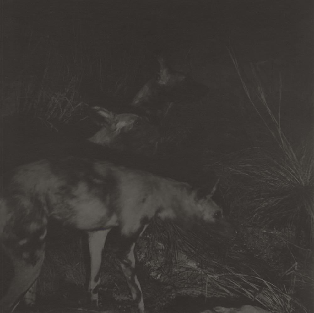 gregor-toerzs-boy-on-safari-no11