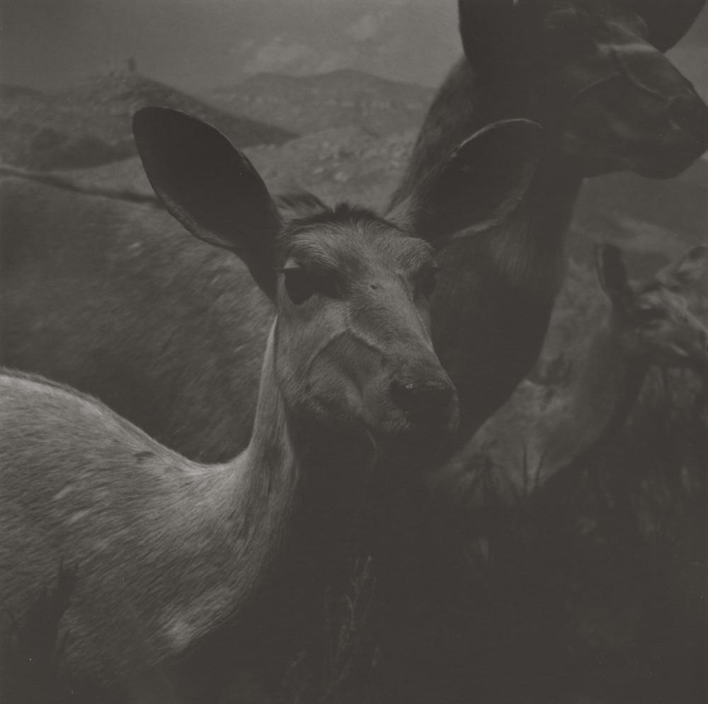 gregor-toerzs-boy-on-safari-no12