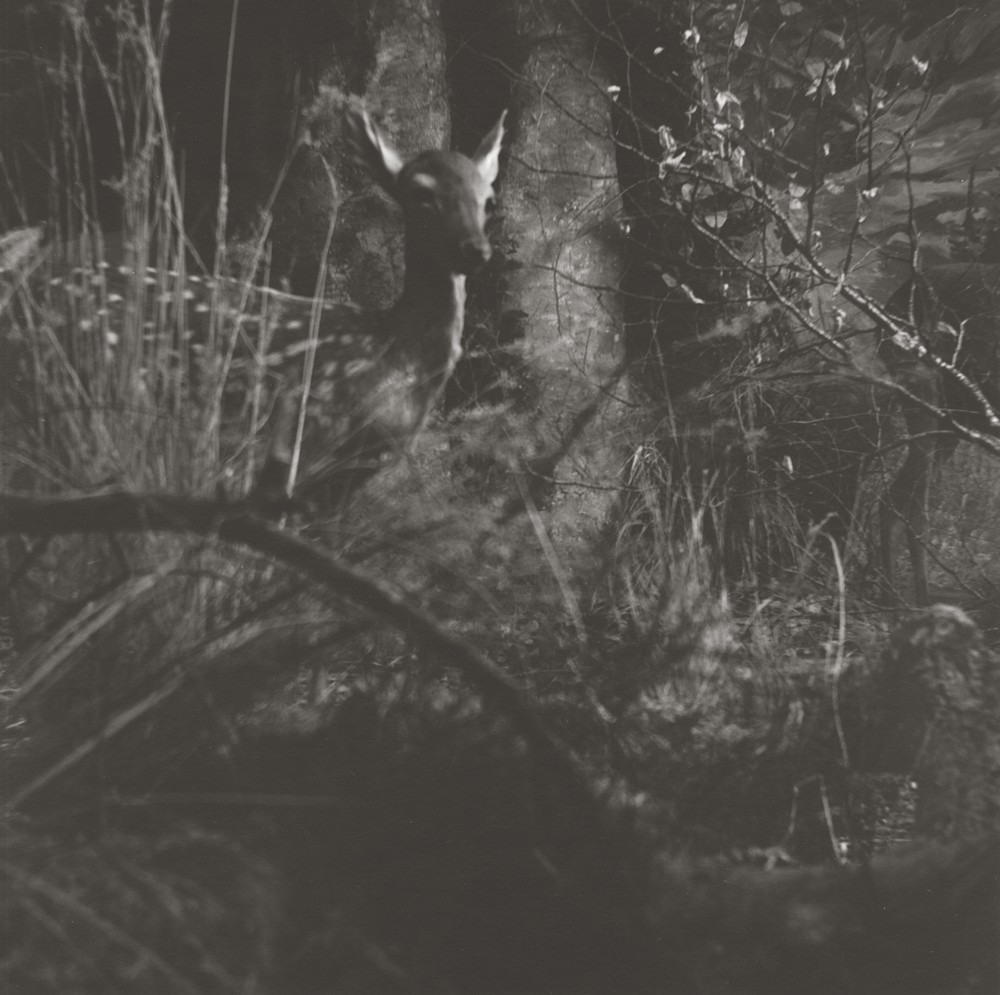 gregor-toerzs-boy-on-safari-no14