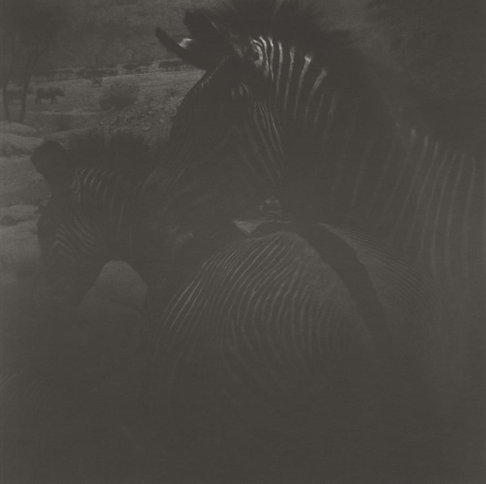 gregor-toerzs-boy-on-safari-no15