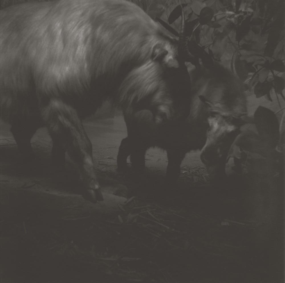 gregor-toerzs-boy-on-safari-no17