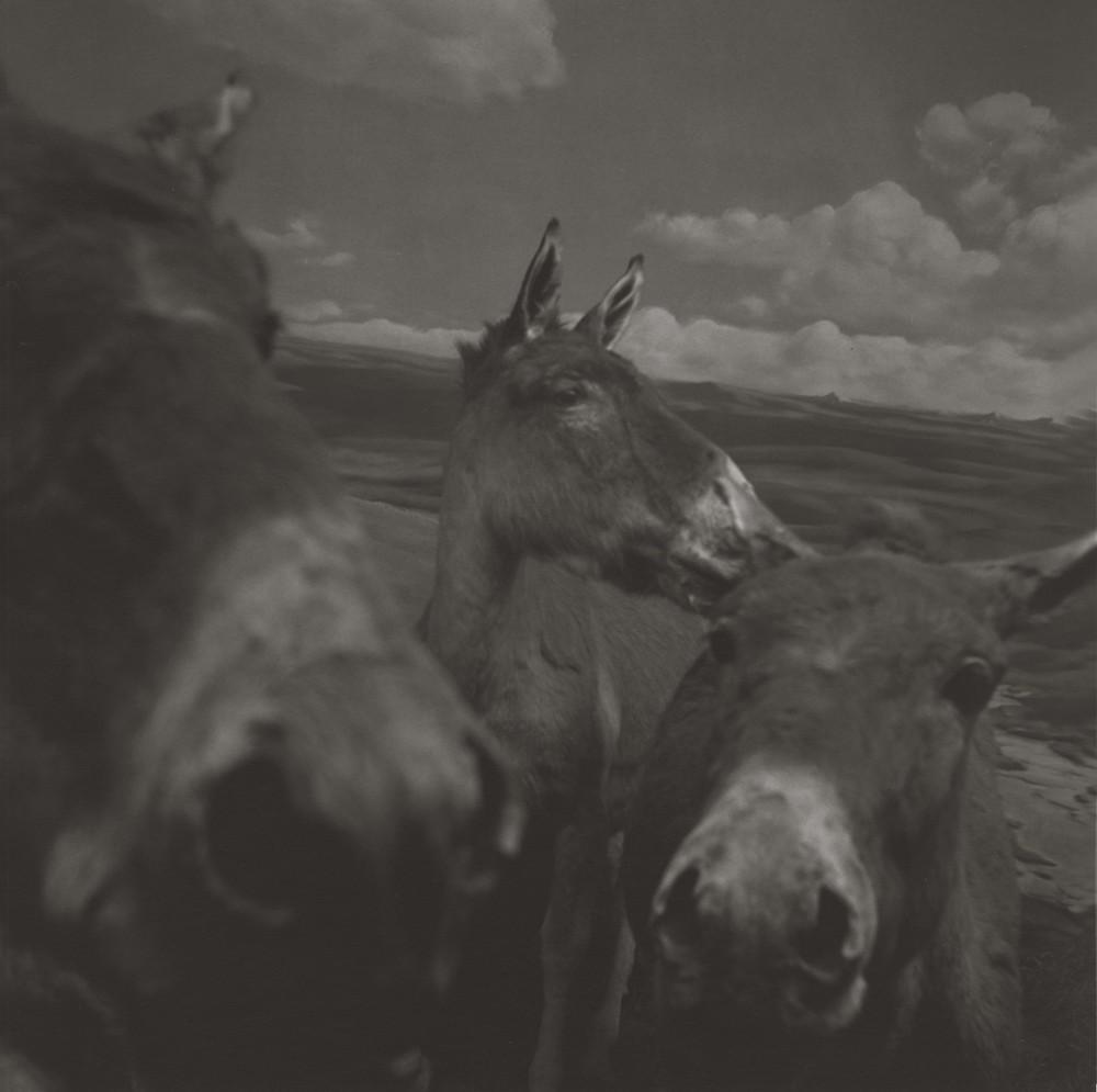 gregor-toerzs-boy-on-safari-no19