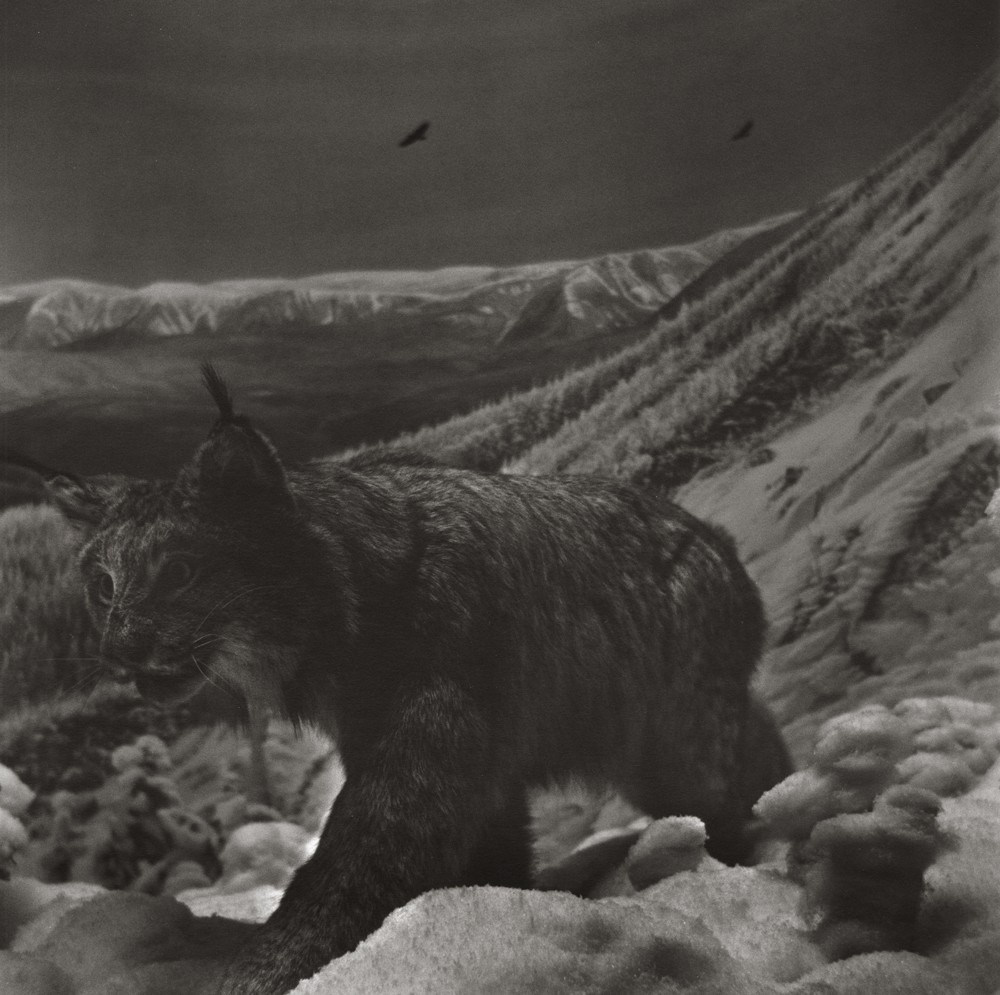 gregor-toerzs-boy-on-safari-no23