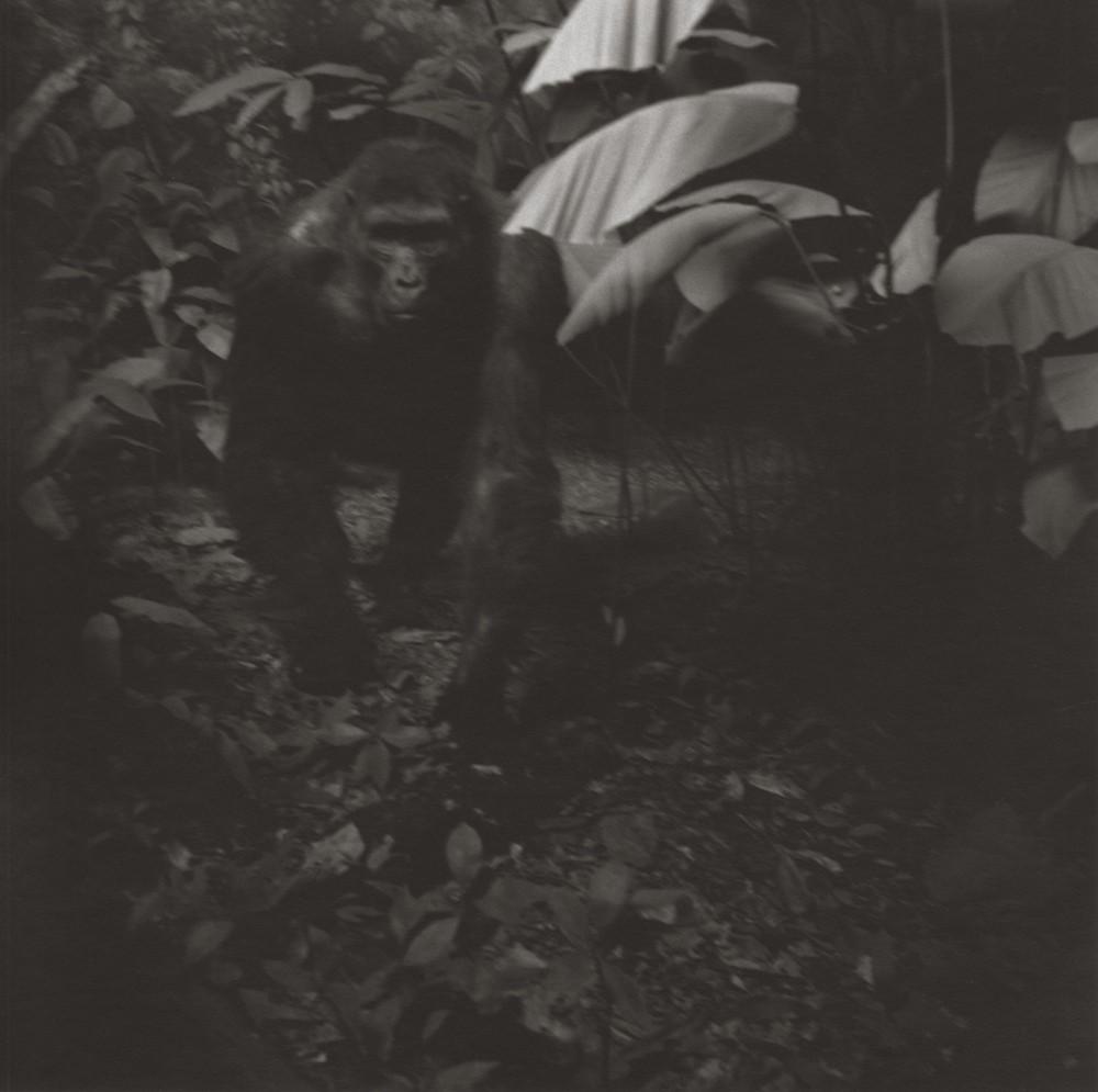 gregor-toerzs-boy-on-safari-no24