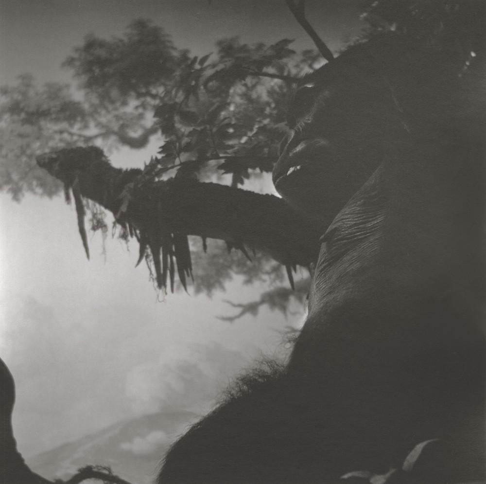 gregor-toerzs-boy-on-safari-no26