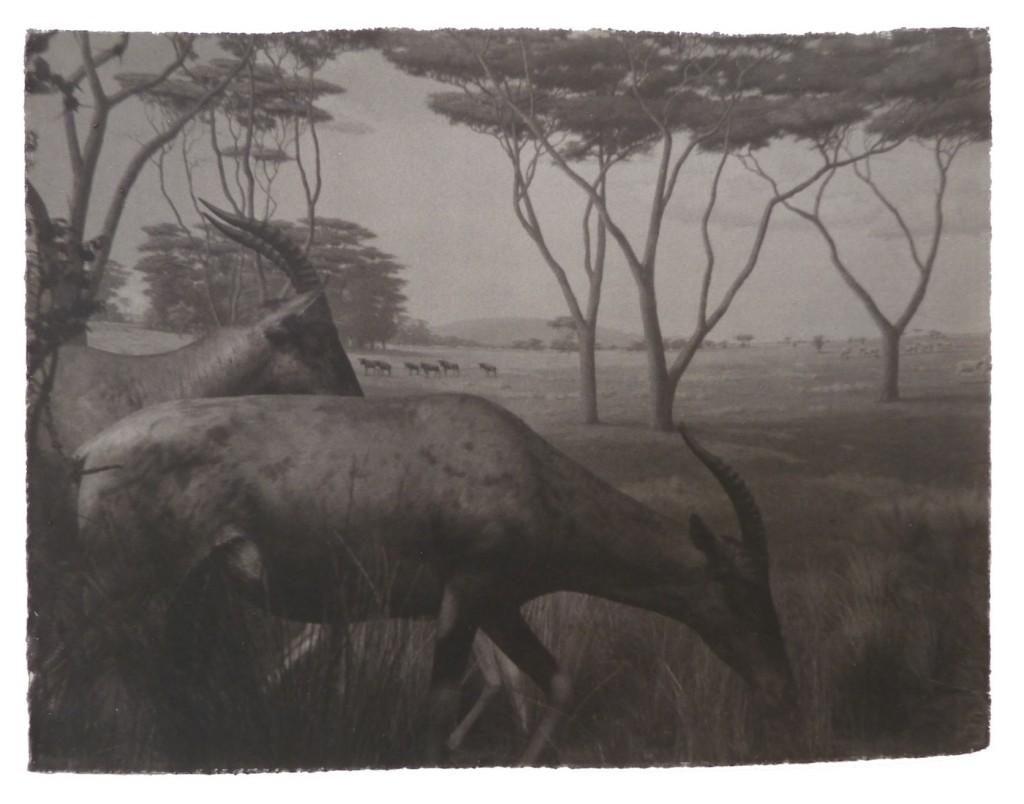 gregor-toerzs-antilopen