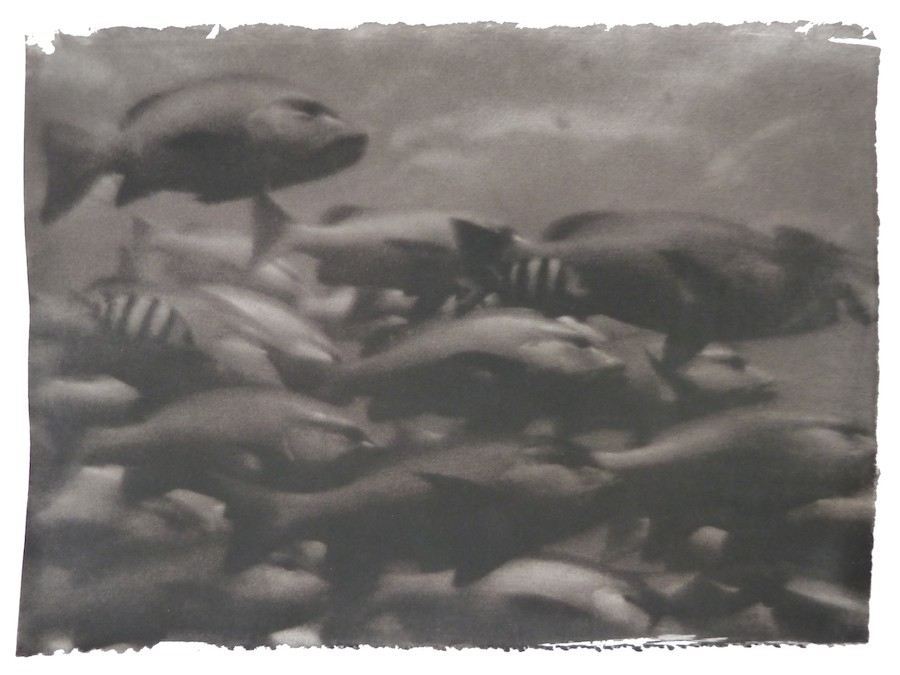 gregor-toerzs-fischschwarm