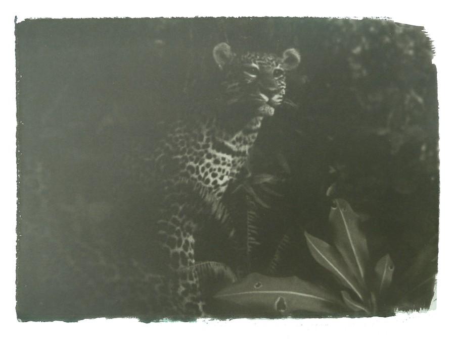 gregor-toerzs-gepard