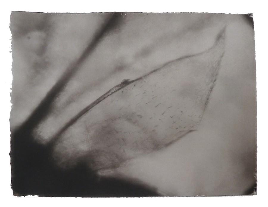 gregor-torzs-mueckenfluegel