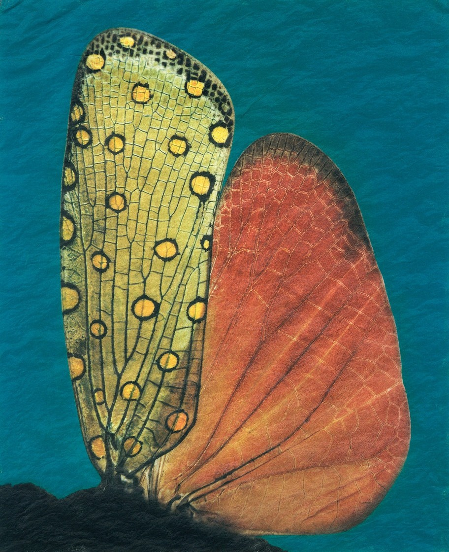 gregor-toerzs-a-la-couleur-wing-wing-2-cutout
