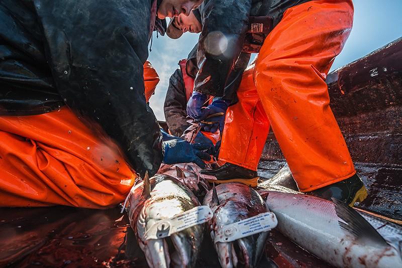 dmitrij-leltschuk-mare-schottland-lachsfischer