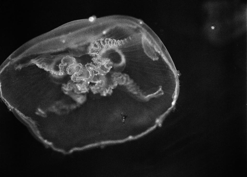 mathias-bothor-mit-ohne-menschen-meduse