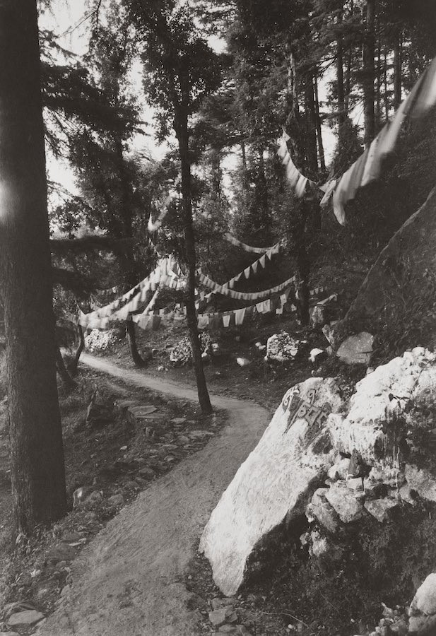 kenro-izu-india-sacred-within-dharamsala-421