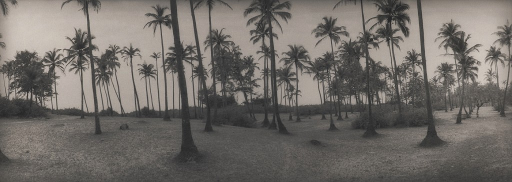 silke-lauffs-120-palmtrees-india