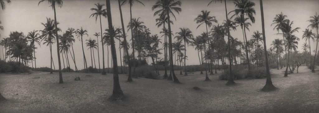 silke-lauffs-120-palmtrees-india